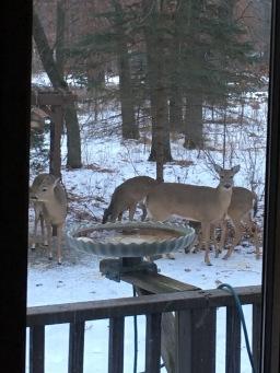 Heard of deer